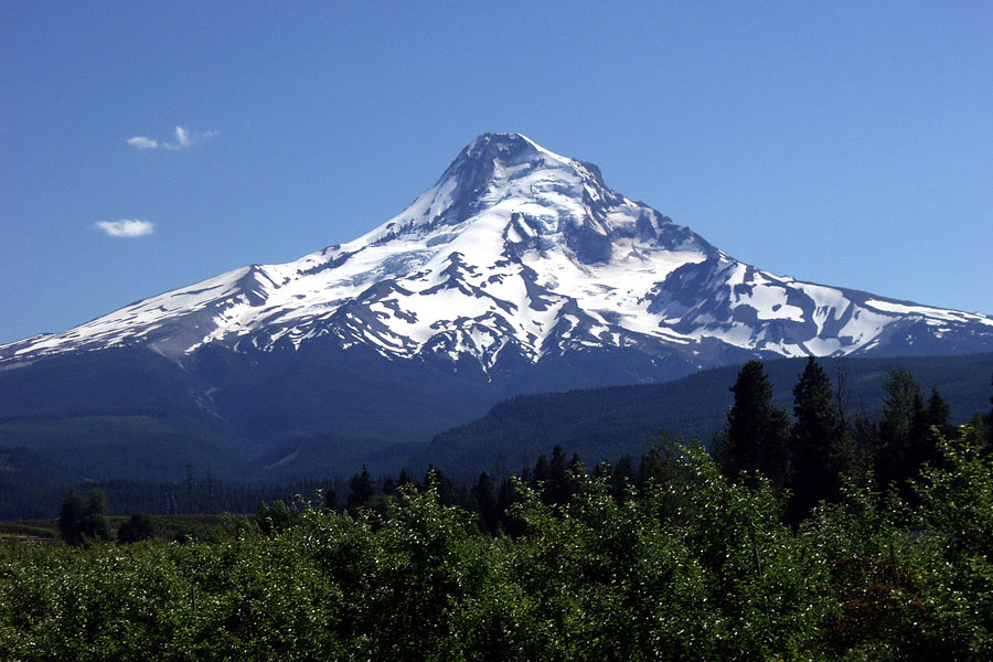 Mount hood in Oregon during a warm summer's day with a fruit orchard in the foreground